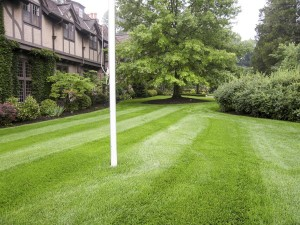 Summerbreeze_Landscaping_LawnMaint_006